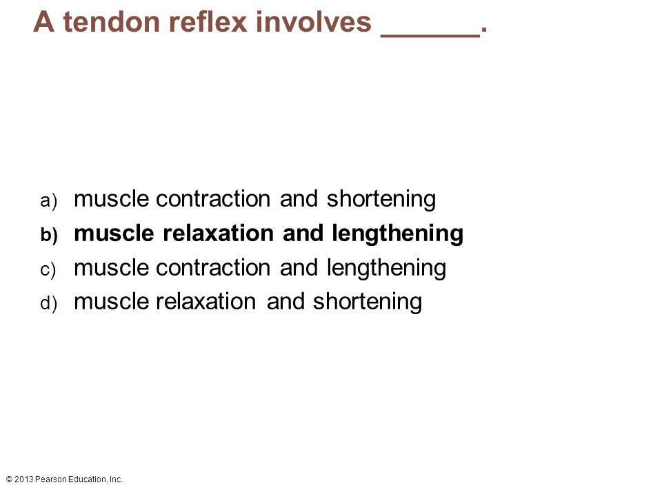 A tendon reflex involves ______.