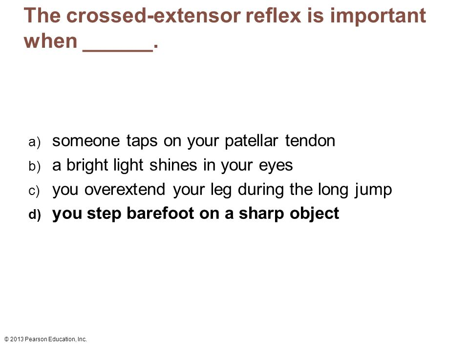 The crossed-extensor reflex is important when ______.