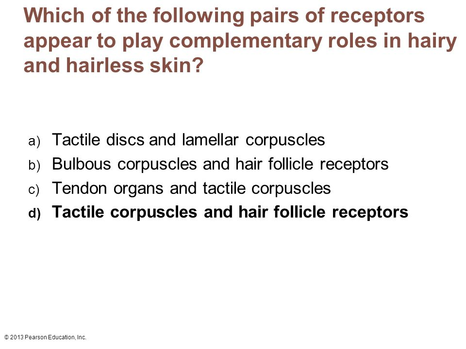 Which of the following pairs of receptors appear to play complementary roles in hairy and hairless skin