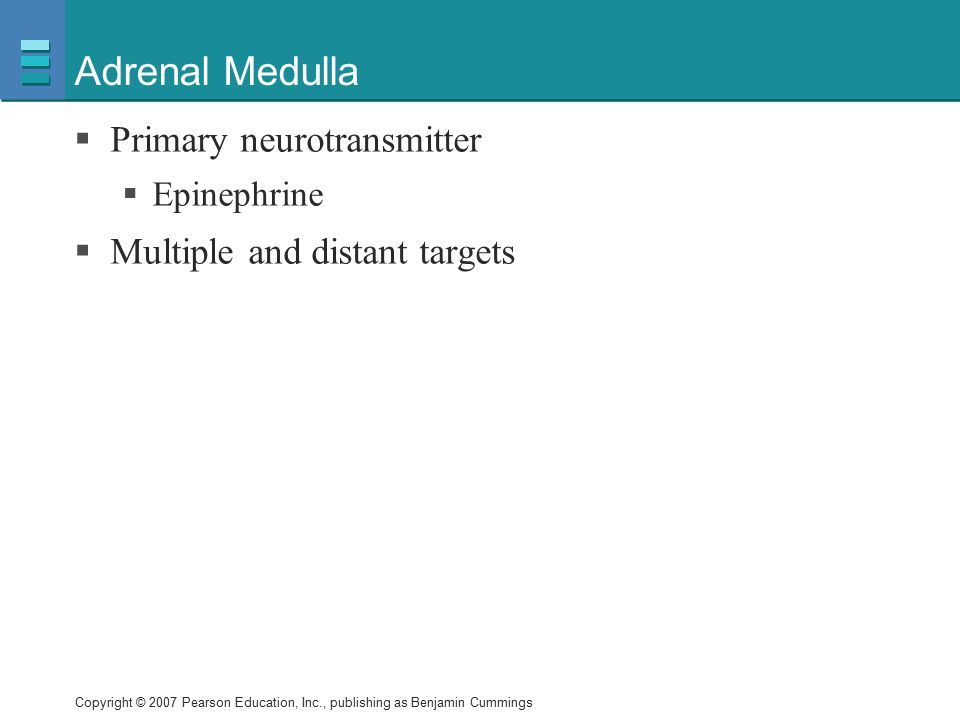 Adrenal Medulla Primary neurotransmitter Multiple and distant targets