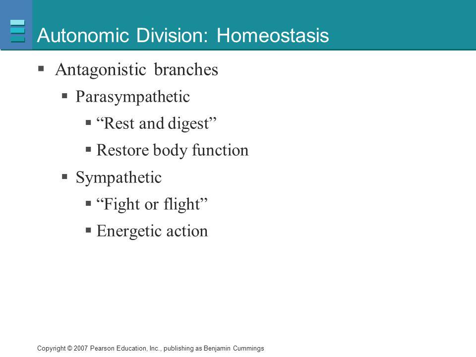 Autonomic Division: Homeostasis