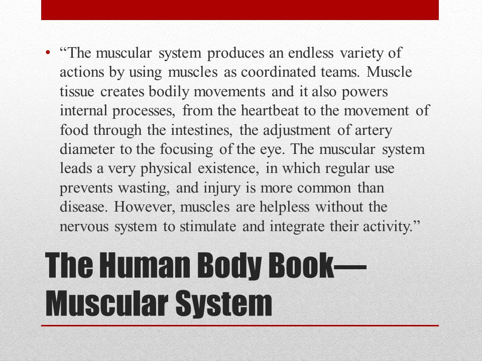 The Human Body Book—Muscular System