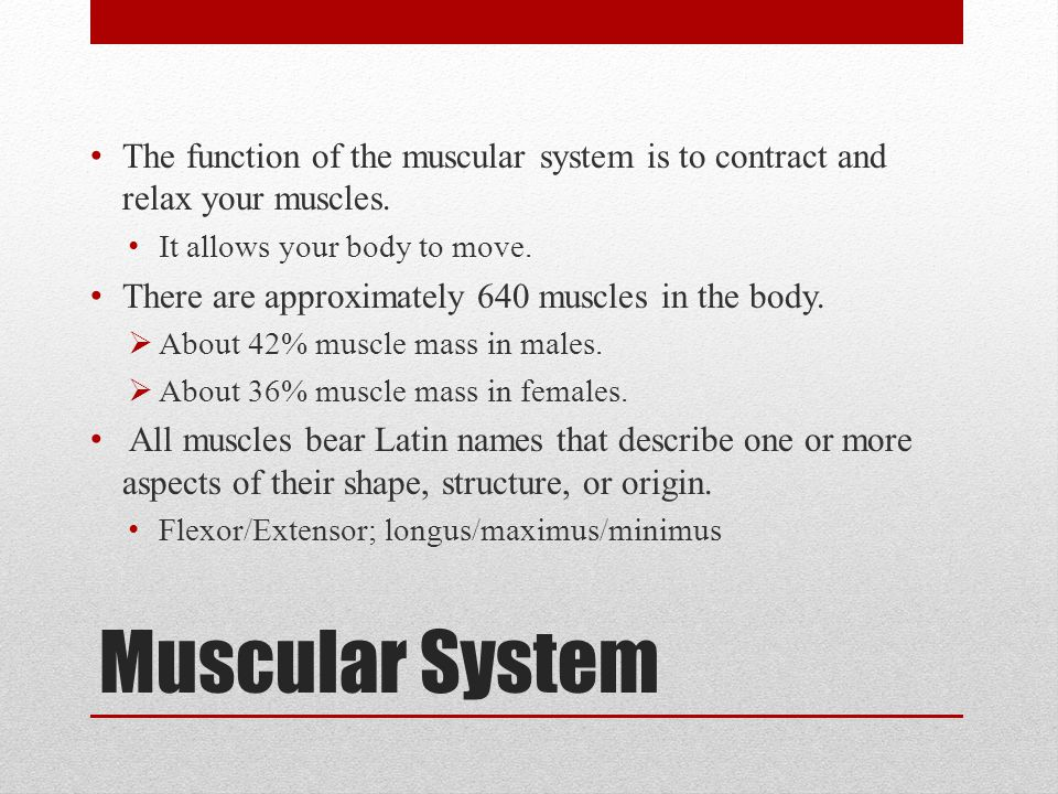 The function of the muscular system is to contract and relax your muscles.