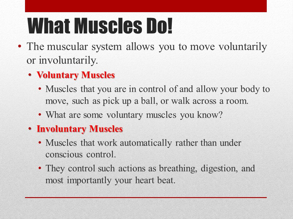 What Muscles Do! The muscular system allows you to move voluntarily or involuntarily. Voluntary Muscles.