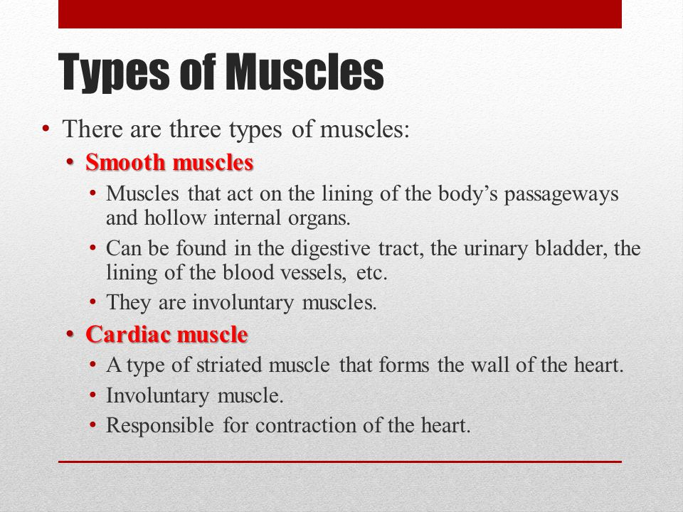 Types of Muscles There are three types of muscles: Smooth muscles