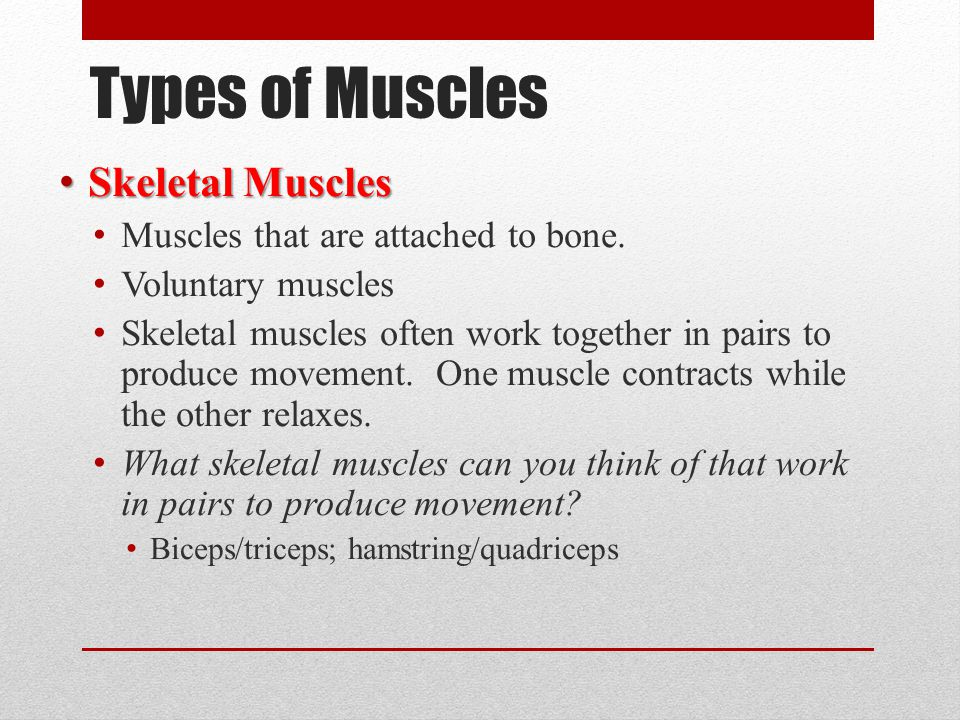 Types of Muscles Skeletal Muscles Muscles that are attached to bone.