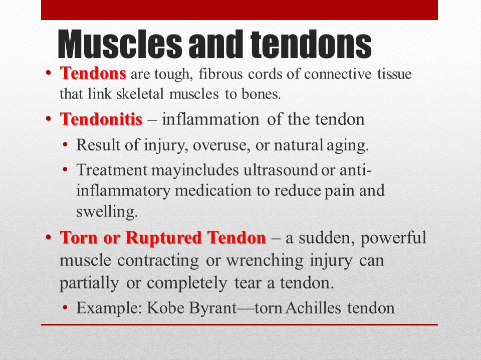 Muscles and tendons Tendons are tough, fibrous cords of connective tissue that link skeletal muscles to bones.