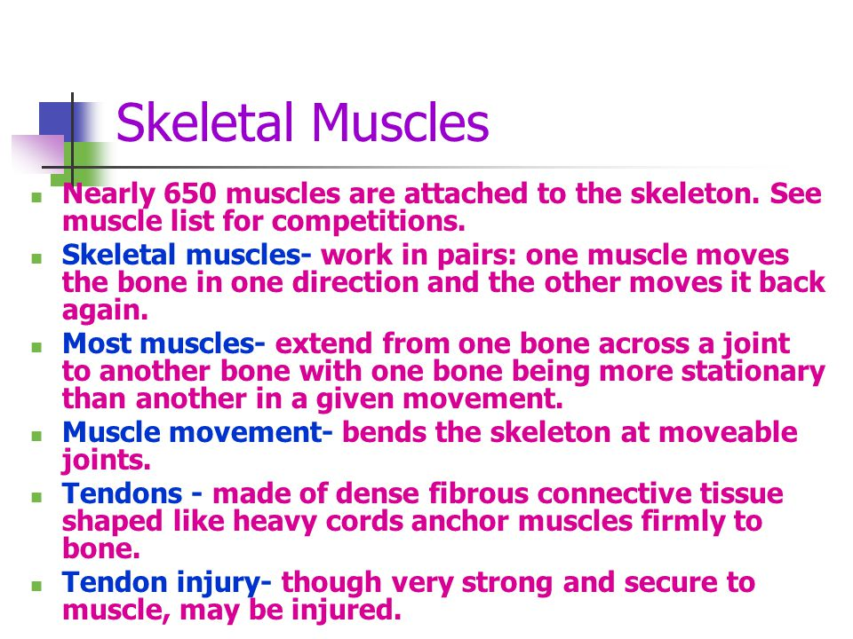 Skeletal Muscles Nearly 650 muscles are attached to the skeleton. See muscle list for competitions.