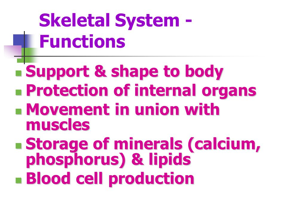 Skeletal System - Functions