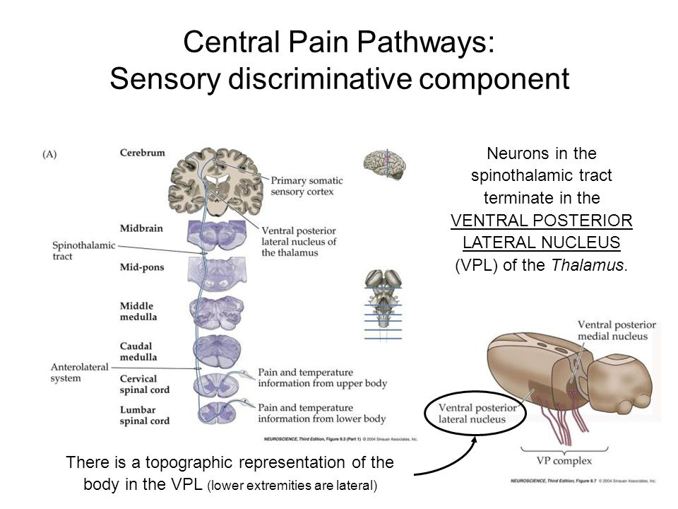 Central Pain Pathways: Sensory discriminative component
