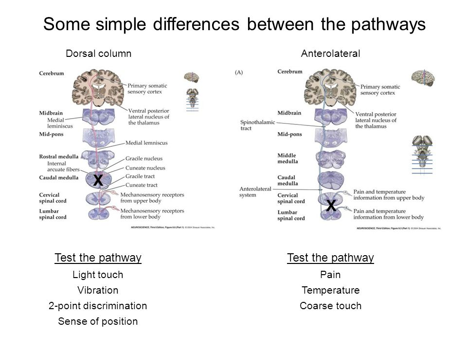 Some simple differences between the pathways
