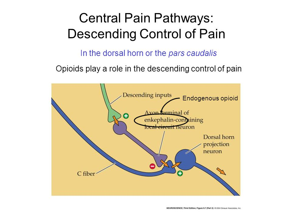 Central Pain Pathways: Descending Control of Pain