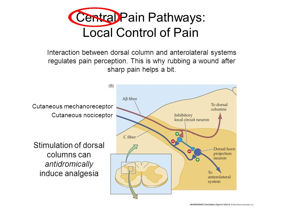Central Pain Pathways: Local Control of Pain