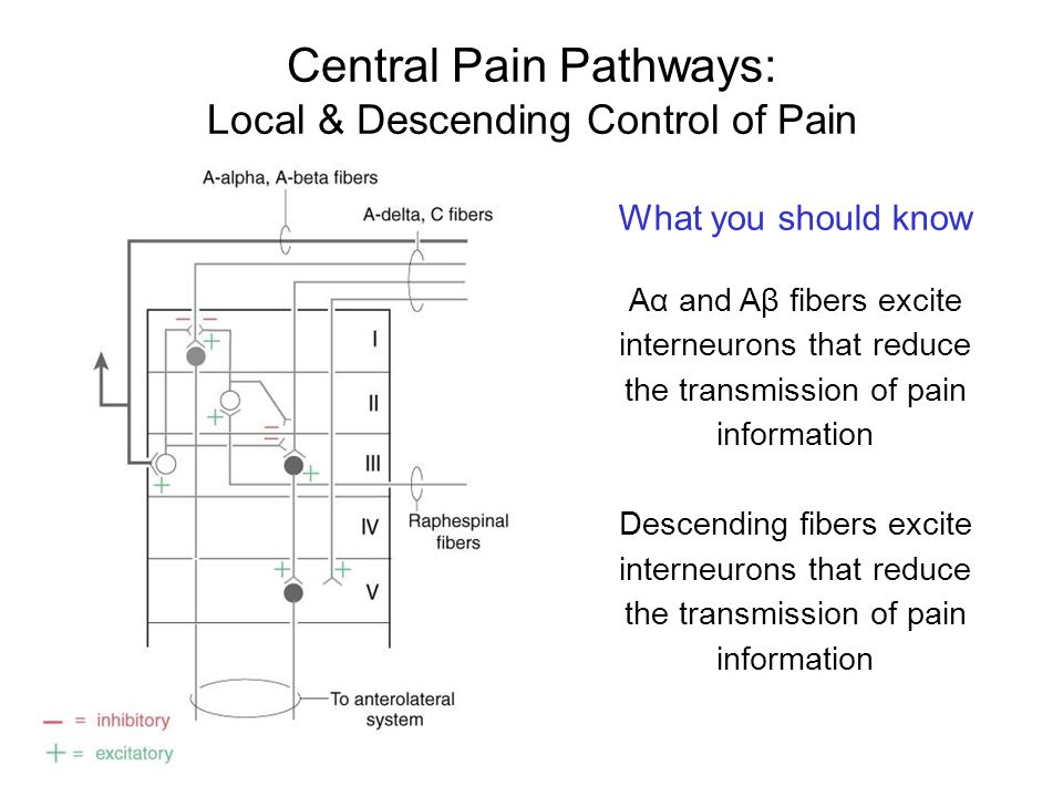 Central Pain Pathways:
