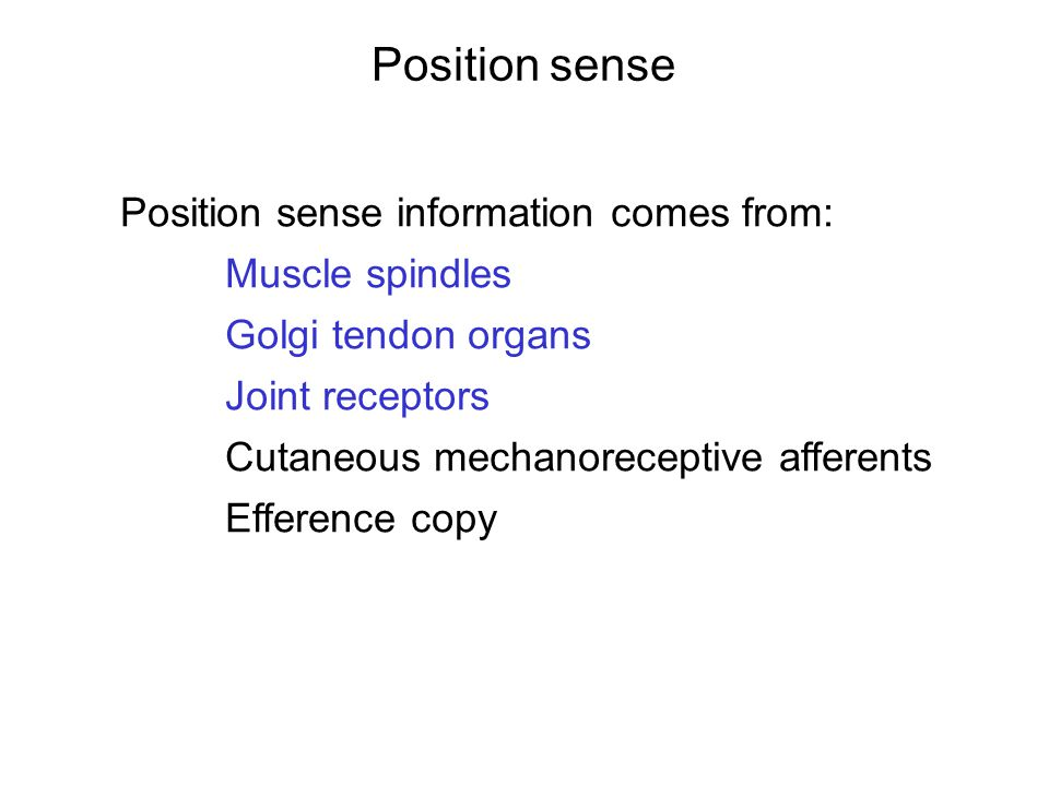 Position sense Position sense information comes from: Muscle spindles