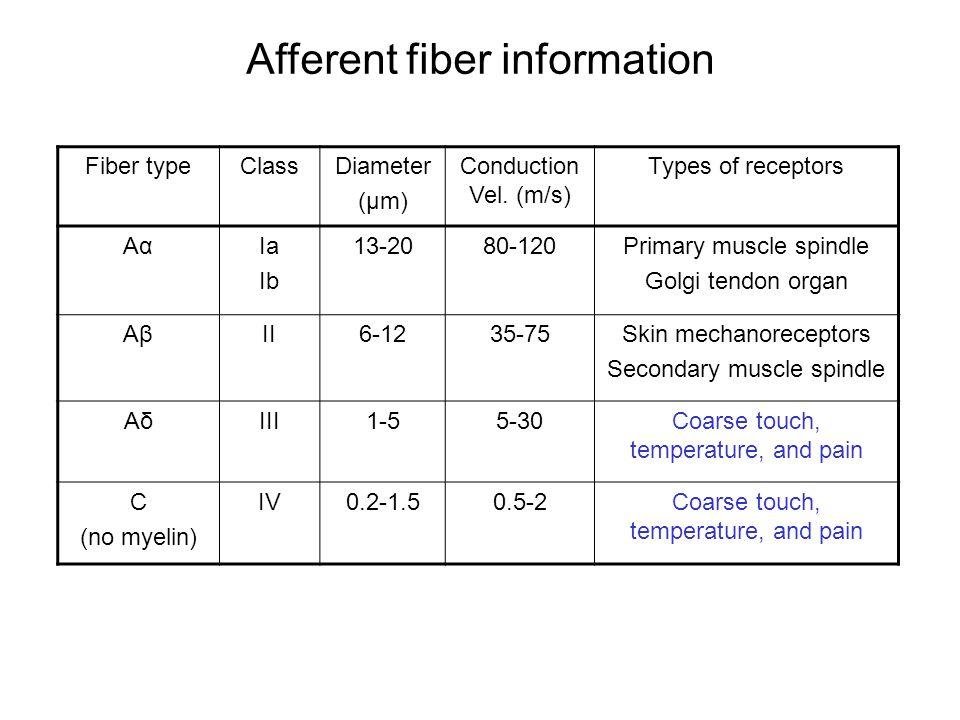 Afferent fiber information