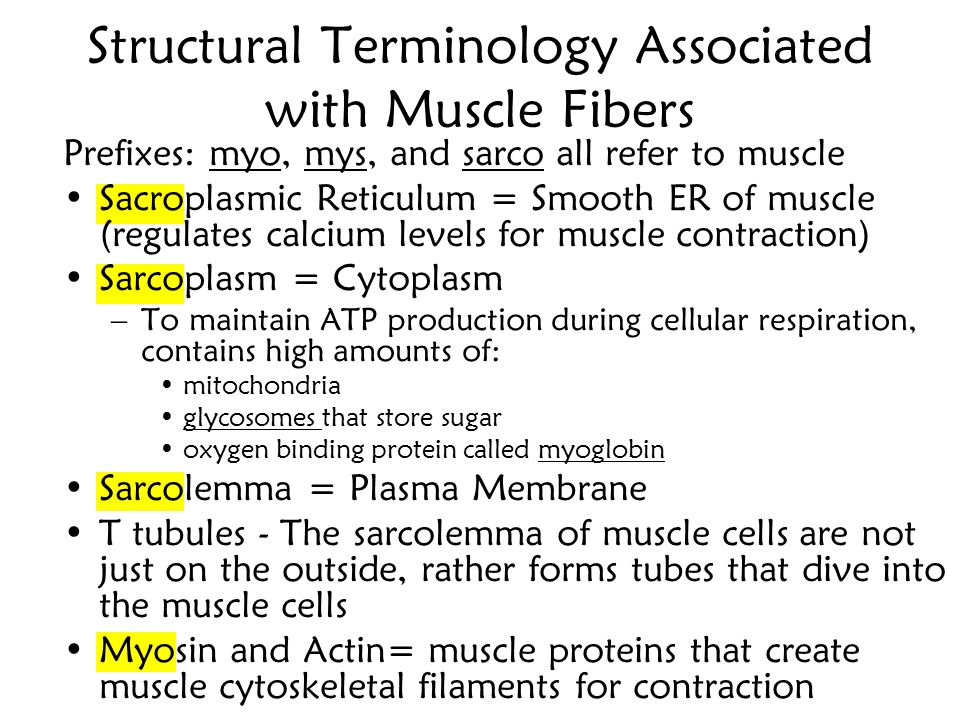 Structural Terminology Associated with Muscle Fibers