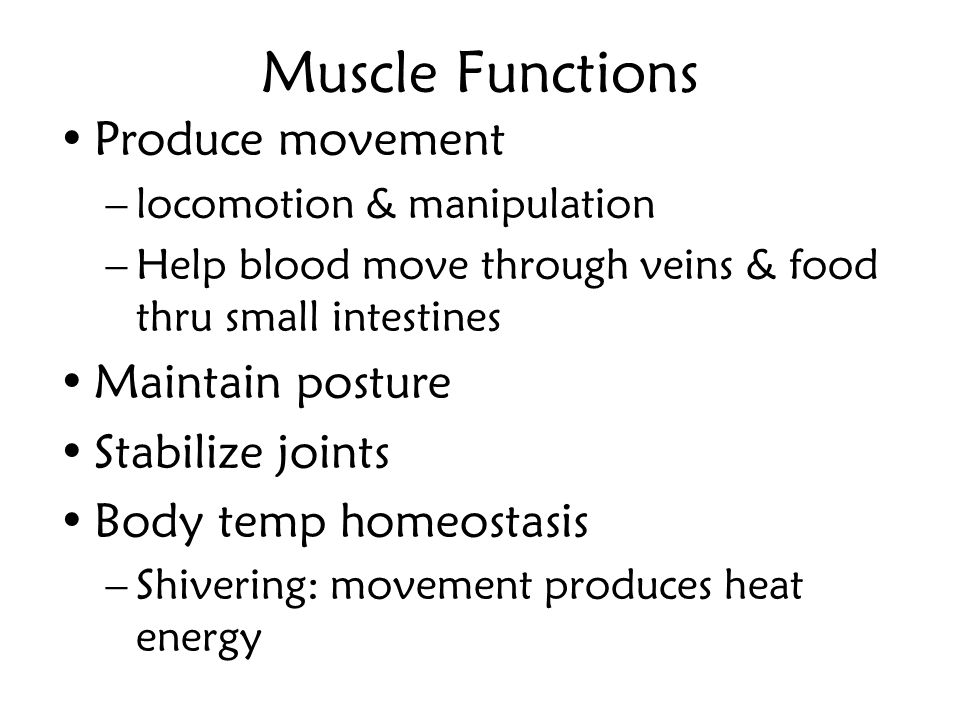 Muscle Functions Produce movement Maintain posture Stabilize joints