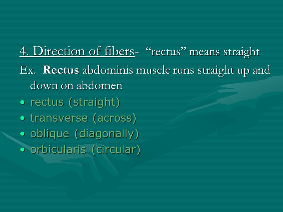 4. Direction of fibers- rectus means straight