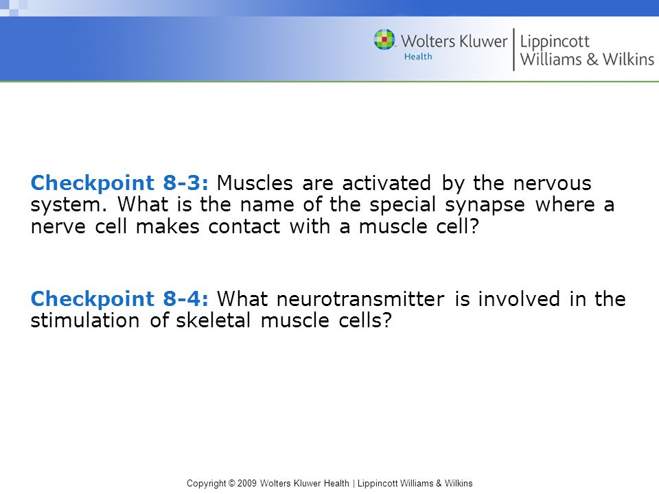 Checkpoint 8-3: Muscles are activated by the nervous system