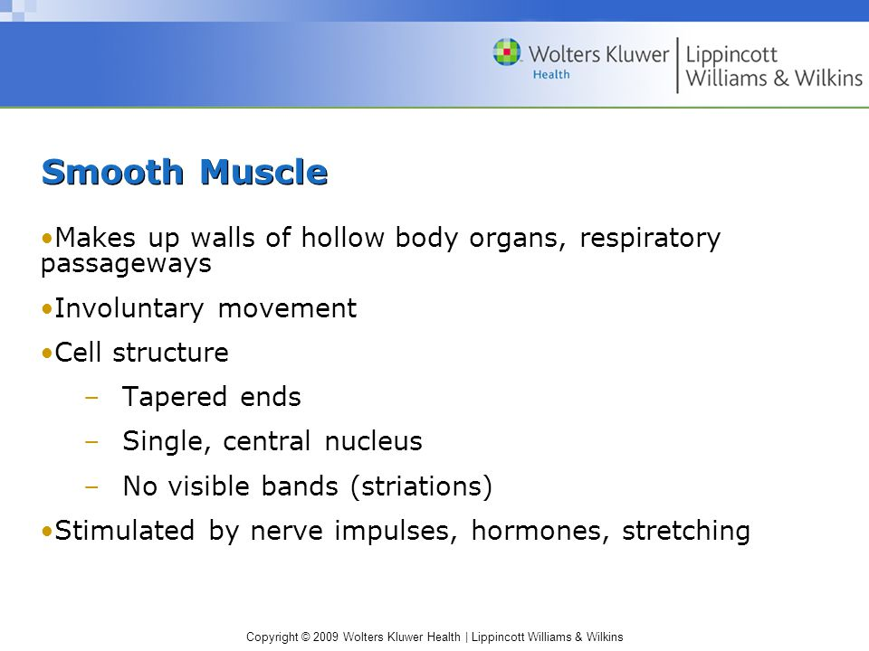 Smooth Muscle Makes up walls of hollow body organs, respiratory passageways. Involuntary movement.