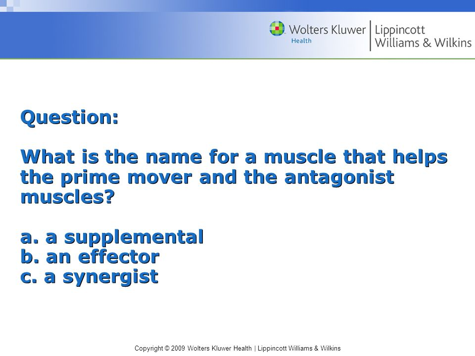 Question: What is the name for a muscle that helps the prime mover and the antagonist muscles.