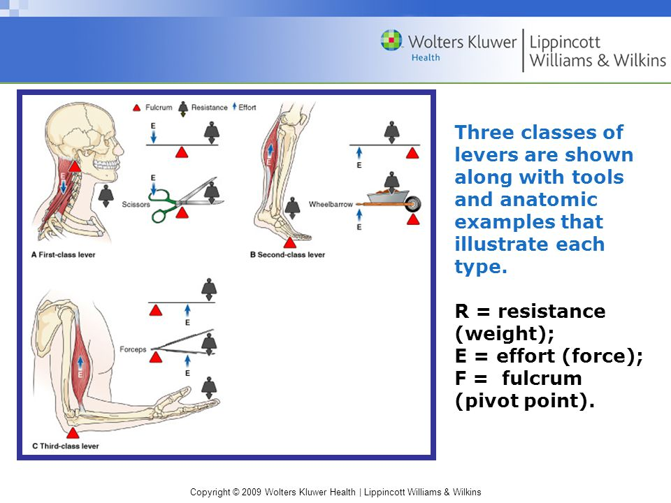 Three classes of levers are shown along with tools and anatomic examples that illustrate each type.