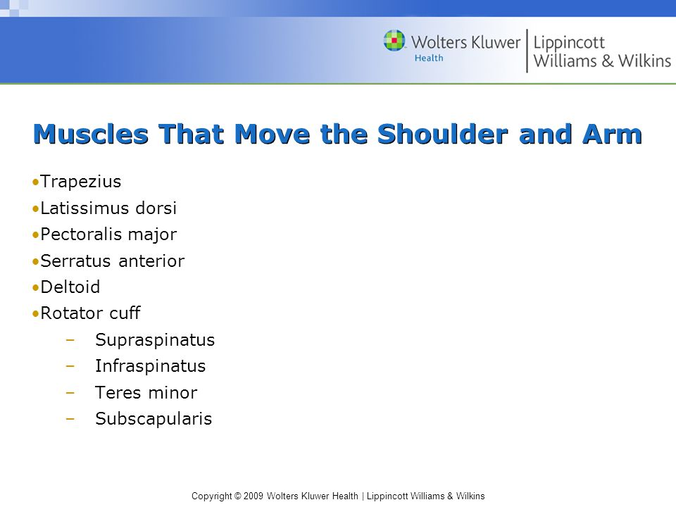 Muscles That Move the Shoulder and Arm