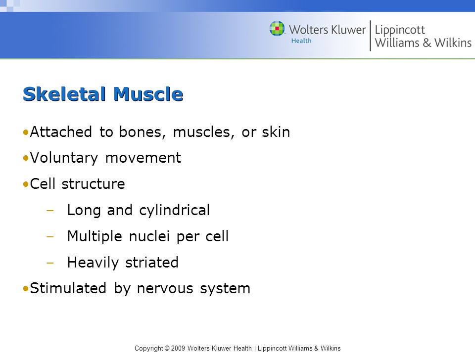 Skeletal Muscle Attached to bones, muscles, or skin Voluntary movement