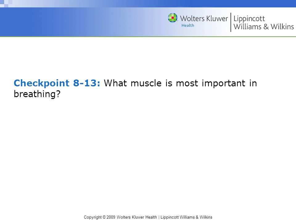Checkpoint 8-13: What muscle is most important in breathing