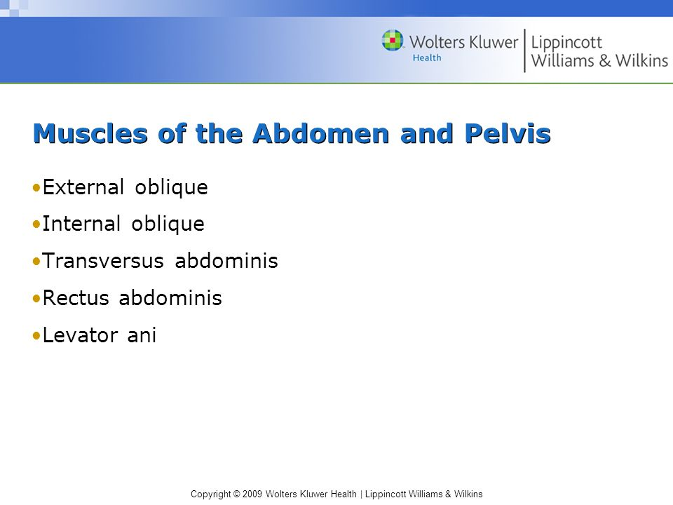 Muscles of the Abdomen and Pelvis