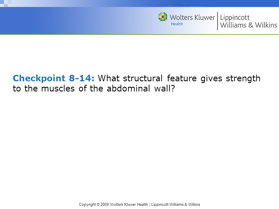 Checkpoint 8-14: What structural feature gives strength to the muscles of the abdominal wall