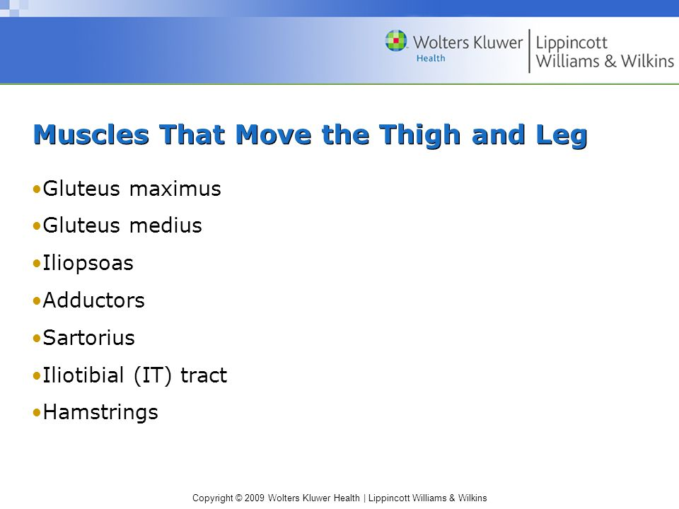 Muscles That Move the Thigh and Leg