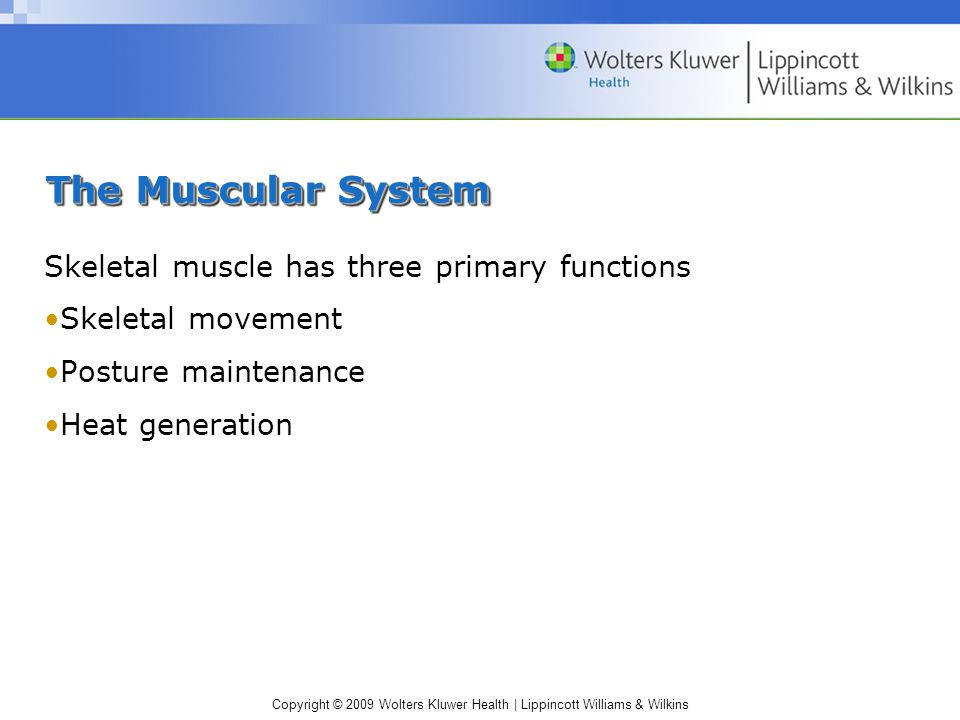 The Muscular System Skeletal muscle has three primary functions