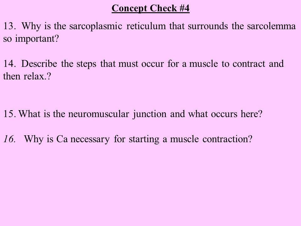 What is the neuromuscular junction and what occurs here