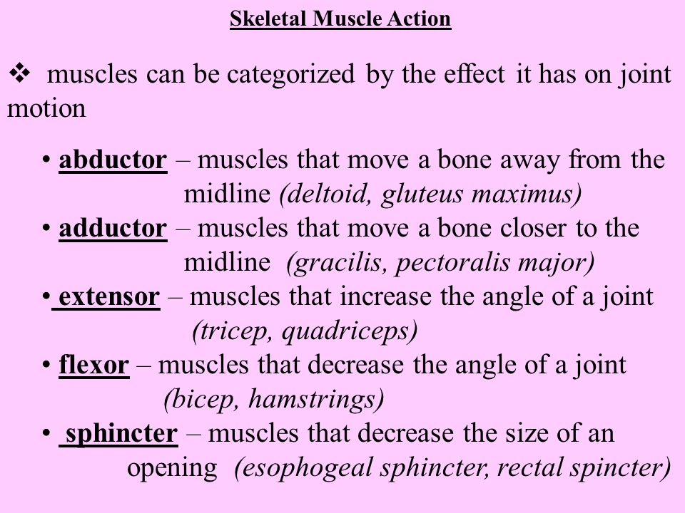 muscles can be categorized by the effect it has on joint motion