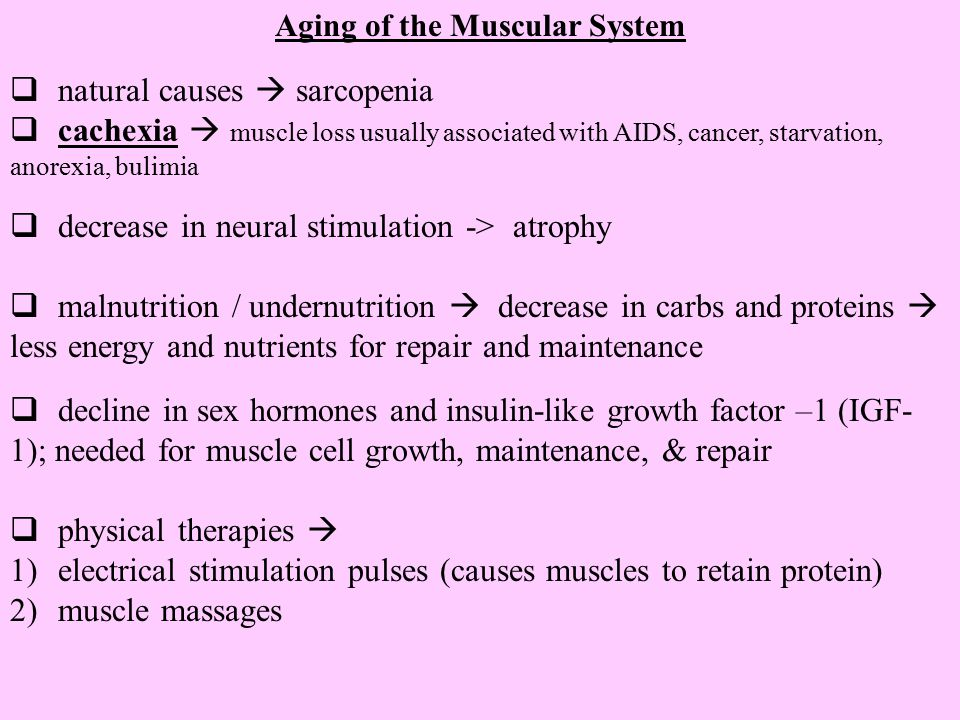 Aging of the Muscular System