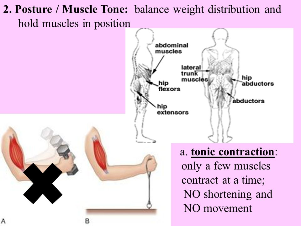 2. Posture / Muscle Tone: balance weight distribution and hold muscles in position