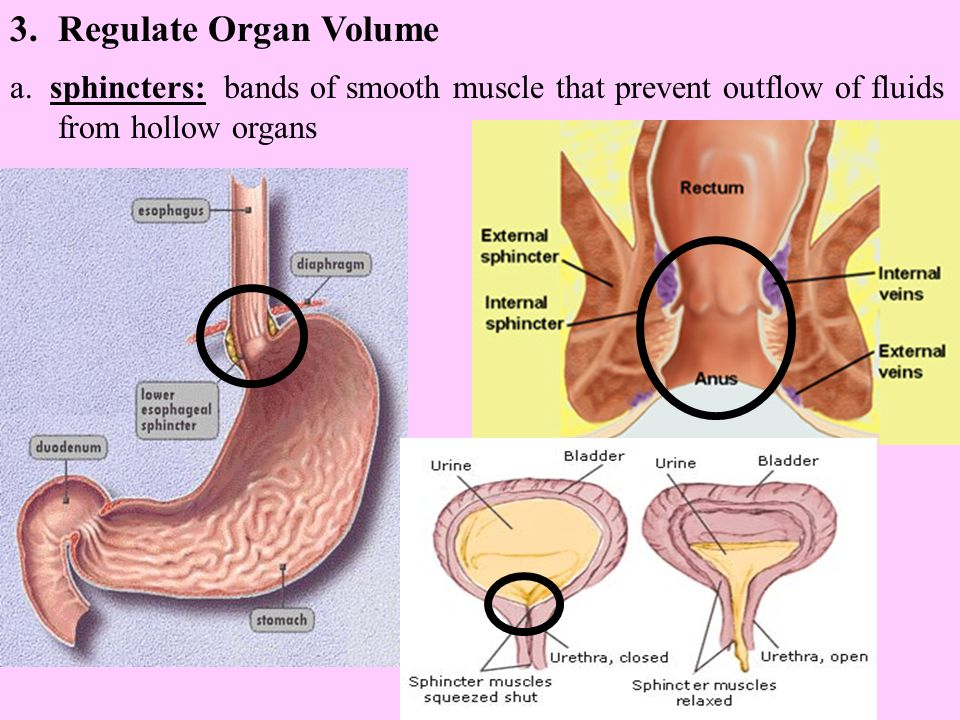 Regulate Organ Volume a.