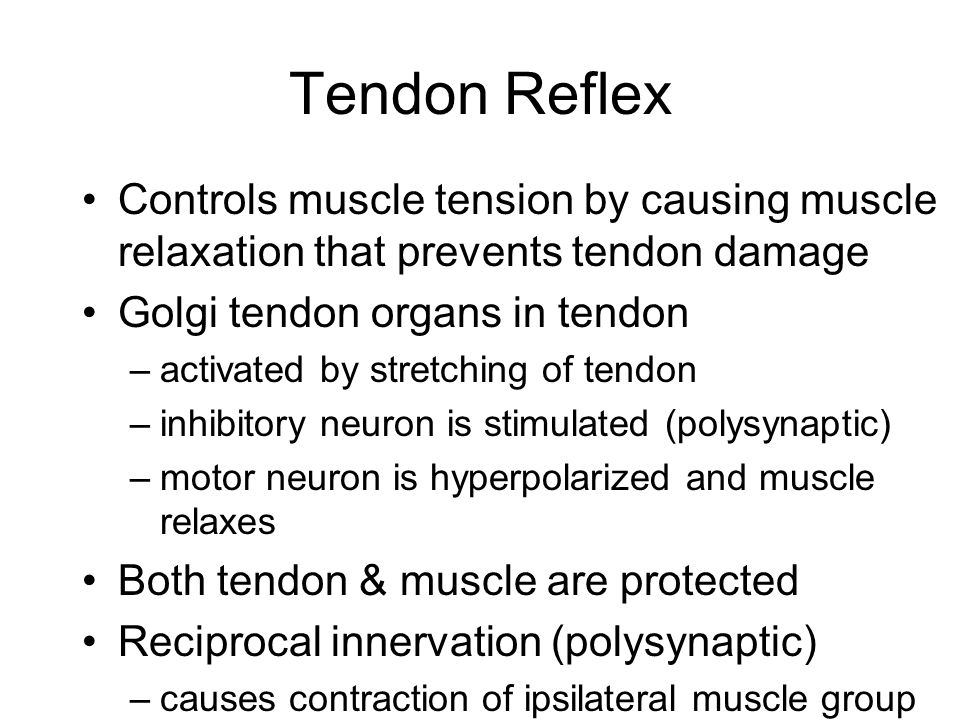 Tendon Reflex Controls muscle tension by causing muscle relaxation that prevents tendon damage. Golgi tendon organs in tendon.