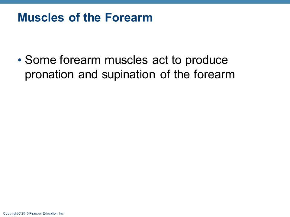 Muscles of the Forearm Some forearm muscles act to produce pronation and supination of the forearm