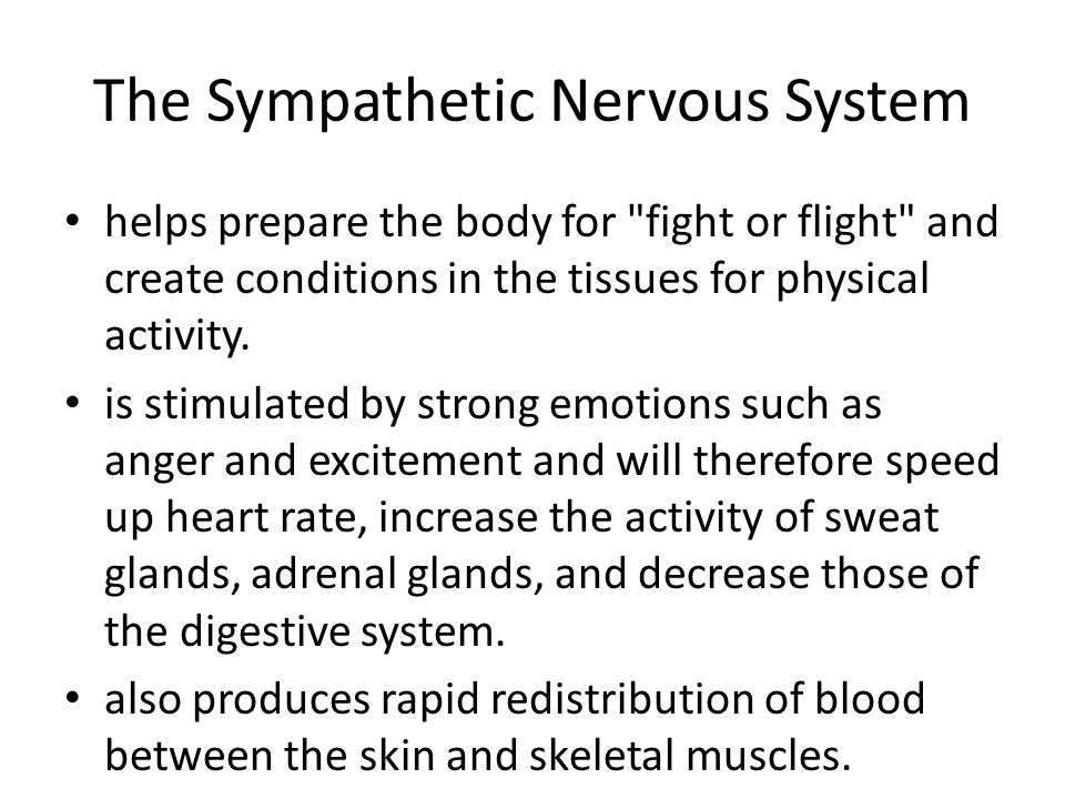 The Sympathetic Nervous System