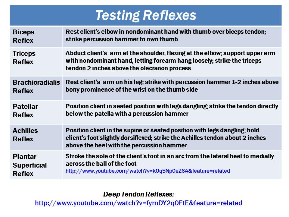 Testing Reflexes Biceps Reflex Triceps Brachioradialis Patellar