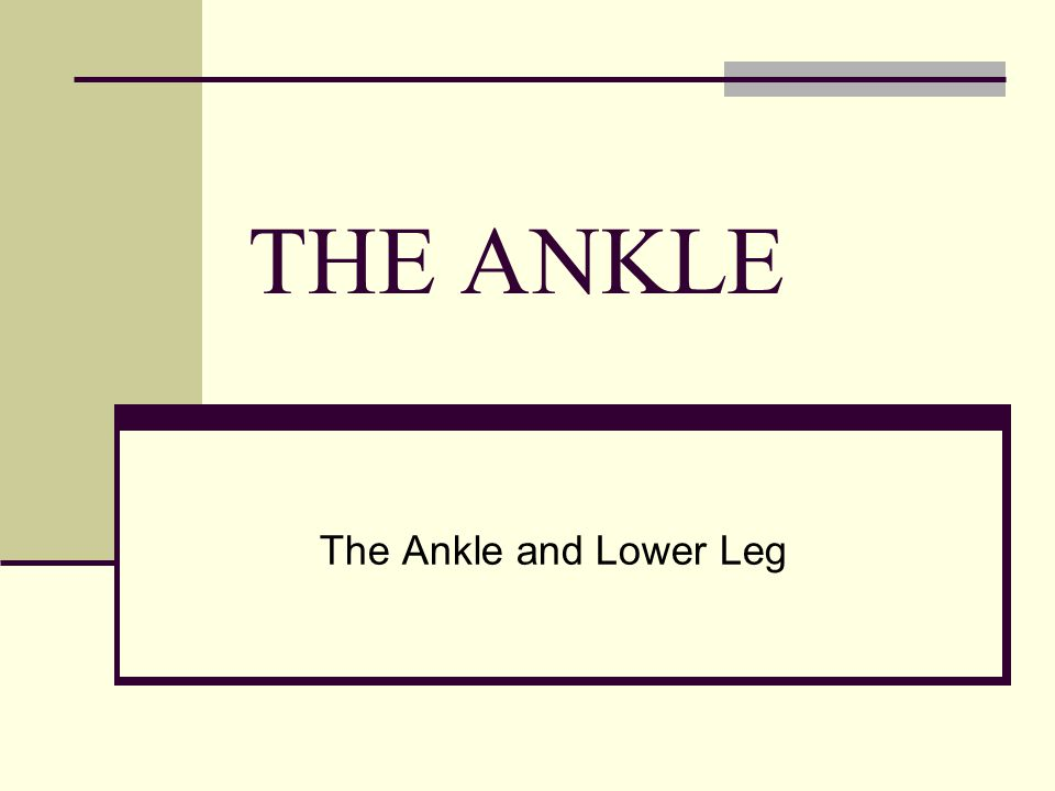 THE ANKLE The Ankle and Lower Leg