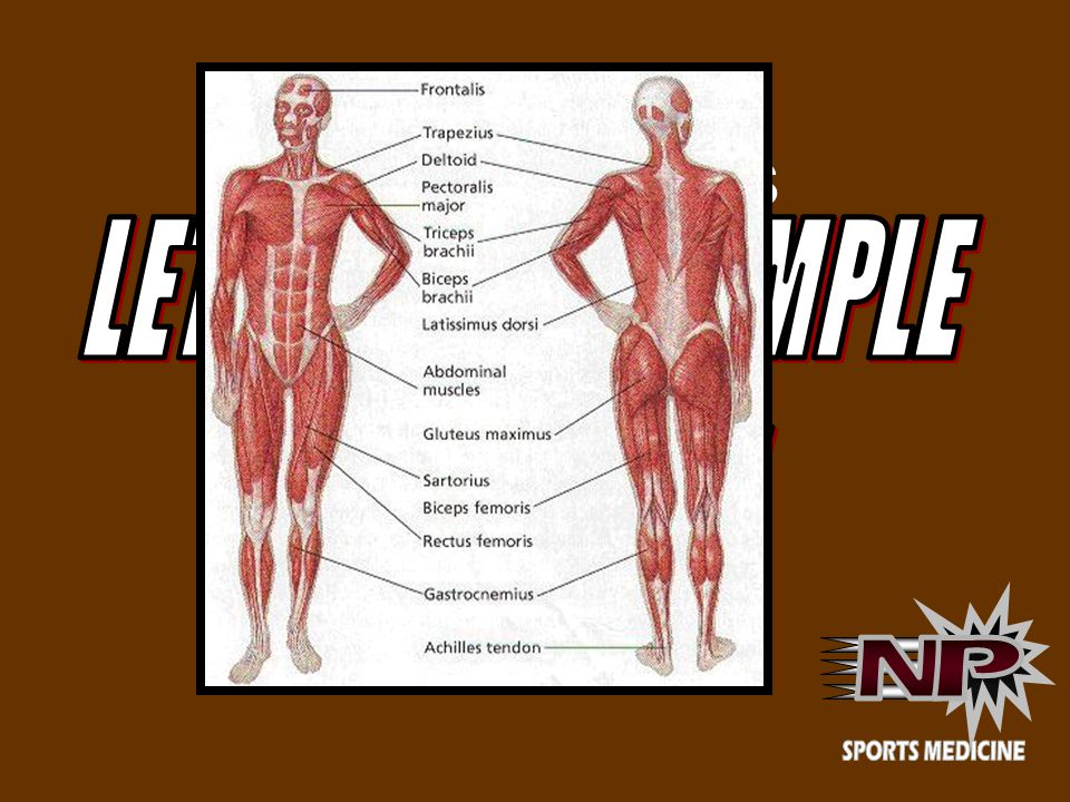 LARGE MUSCLES LET S KEEP IT SIMPLE FOR NOW!! N P SPORTS MEDICINE