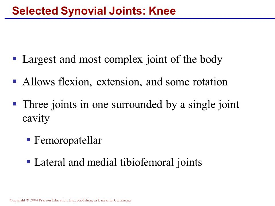 Selected Synovial Joints: Knee
