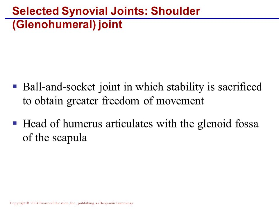 Selected Synovial Joints: Shoulder (Glenohumeral) joint