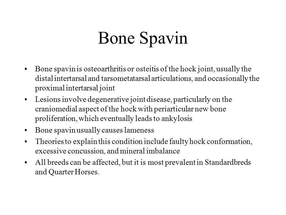 Bone Spavin