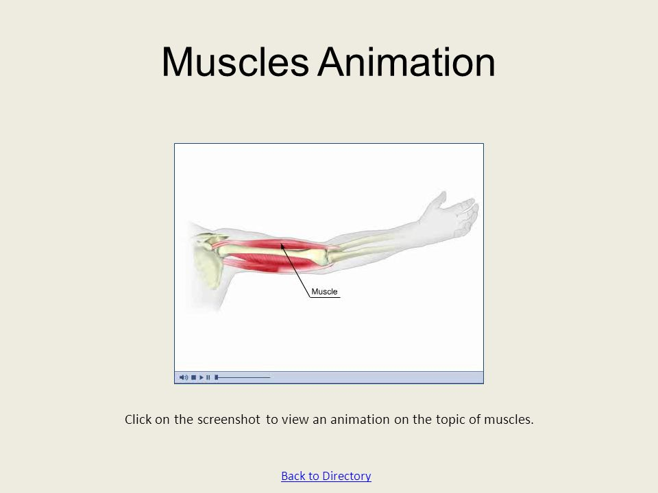 Click on the screenshot to view an animation on the topic of muscles.