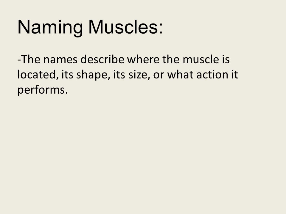 Naming Muscles: -The names describe where the muscle is located, its shape, its size, or what action it performs.